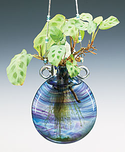Hanging Vase with Plant